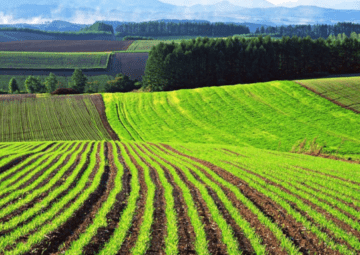 Ukraine to Play Hard in the World's Agriculture Market